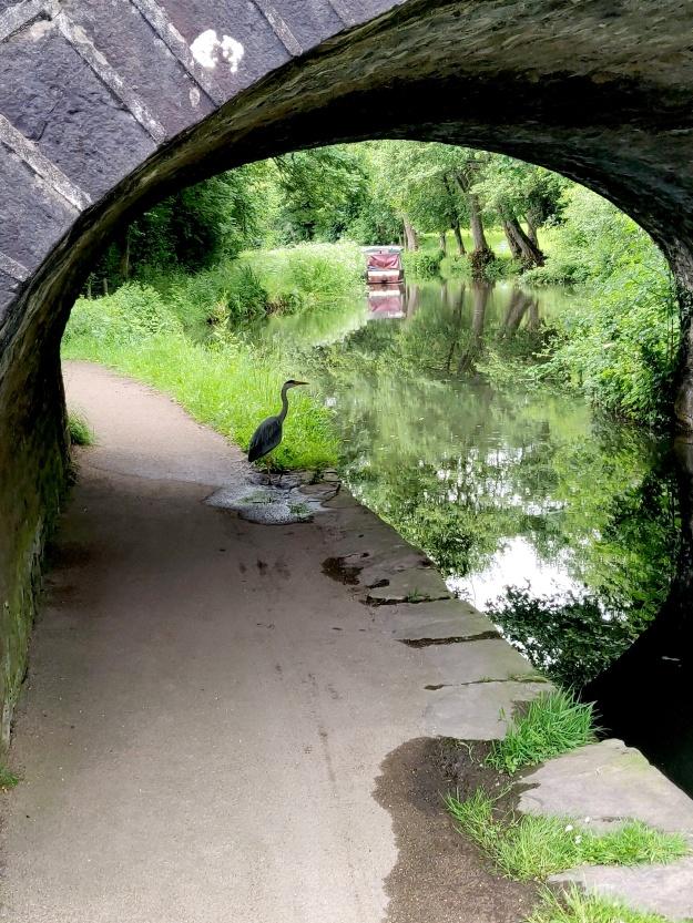Heron Canal